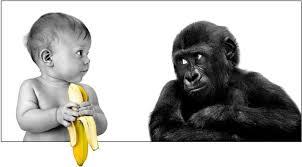 bay and gorilla